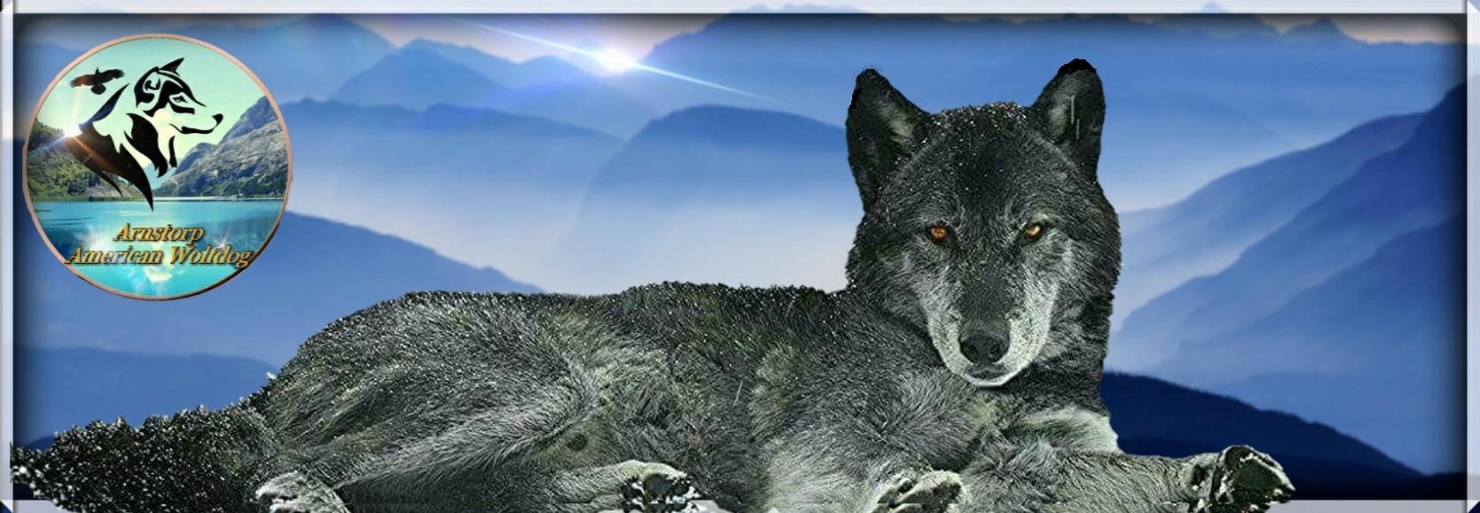Americanwolfdog Sweden