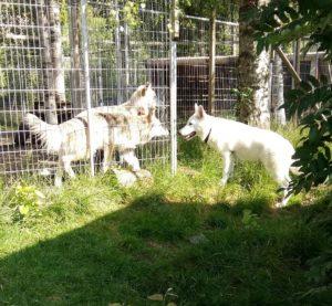 Nicco Bianca o Leo